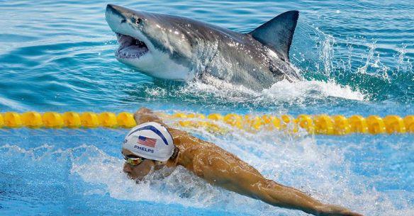 cover-shark-1497883423944.jpg