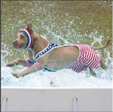 swimdog